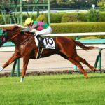 【秋華賞2016出走馬】条件戦からの上がり馬ミエノサクシードに要注意